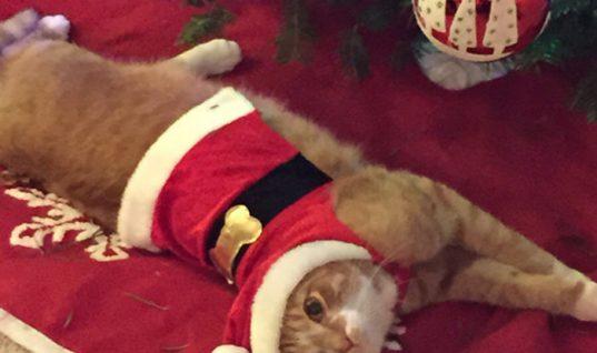5 τρόποι για να σώσετε το Χριστουγεννιάτικο δέντρο από τη γάτα σας
