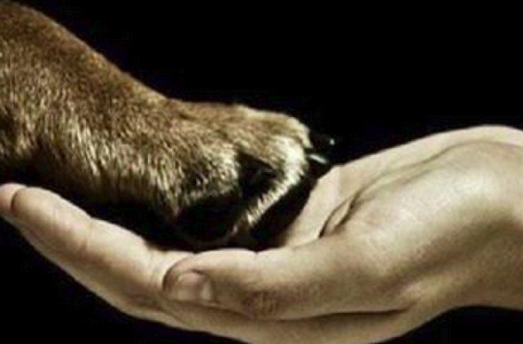 Μυθικό: Φιλόζωη στις ΗΠΑ άφησε περιουσία αξίας 1.200.000 δολάρια σε σκύλους και γάτες