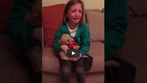 Αντικατέστησαν το λούτρινο σκυλάκι με ένα ζωντανό: Η αντίδραση του παιδιού θα σας εκπλήξει! (ΒΙΝΤΕΟ)