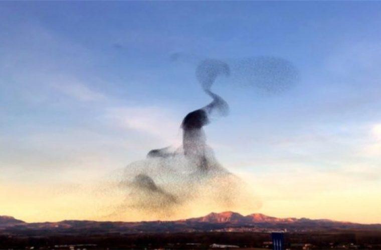 Πουλιά χορεύουν στον αέρα και το βίντεο που τα καταγράφει γίνεται viral!