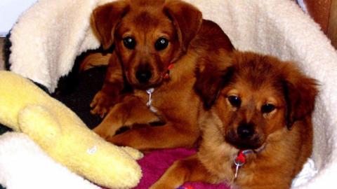 Έπρεπε να αφήσουν τους σκύλους τους όταν μετακόμιζαν: Χρόνια μετά δέχτηκαν ένα τηλεφώνημα που άλλαξε τα πάντα!