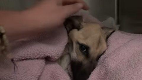 Θαύμα! Φίλησε για τελευταία φορά τον σκελετωμένο σκύλο και μετά… (ΒΙΝΤΕΟ)