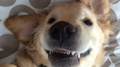 Δείτε τον πρώτο σκύλο στον κόσμο με σιδεράκια! Είναι πανέμορφος (ΕΙΚΟΝΕΣ)