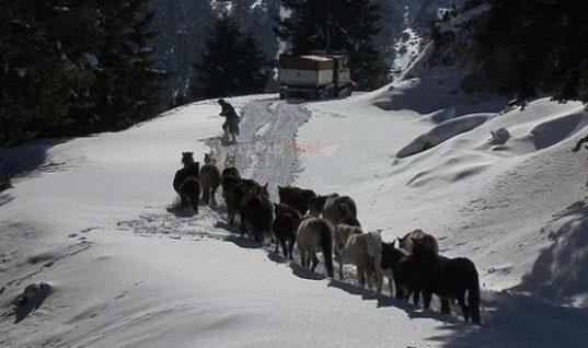 Συναρπαστικές εικόνες: H EMAK απεγκλώβισε 20 άλογα από τα χιόνια στα βουνά της Πίνδου (vid)