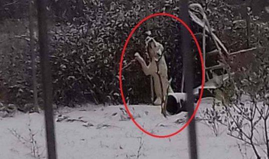 Απίστευτη κτηνωδία στη Δράμα: Σκύλος βρήκε φρικτό θάνατο στα χιόνια