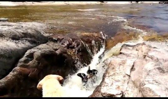Σκύλος- ήρωας σώζει σκύλο από τα ορμητικά νερά χειμάρρου! (vid)