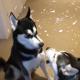 Τρελό: Σκύλοι αλληλοκατηγορούνται όταν τους ρωτάει το αφεντικό ποιος έκανε ζημιά! Η συζήτηση τους που έγινε viral (ΒΙΝΤΕΟ)