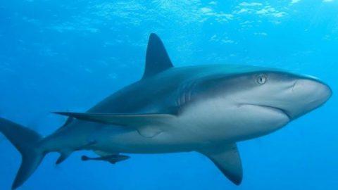 Καρχαρίας κατασπάραξε 17χρονη στην Αυστραλία (vid)