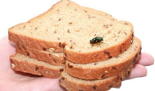 Προσοχή! Τι ακριβώς συμβαίνει όταν μία μύγα προσγειώνεται στο φαγητό μας;
