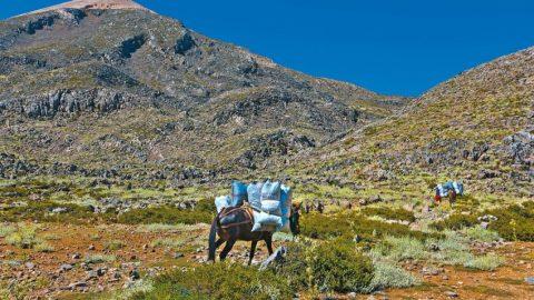 Αλβανοί αλωνίζουν τα ελληνικά βουνά & αφανίζουν τα αρωματικά φυτά