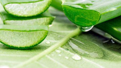 Φυσικό scrub πρόσωπου με aloe vera για βαθιά ενυδάτωση