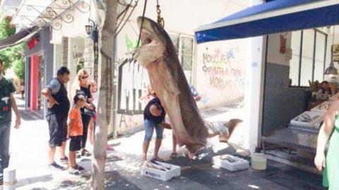 Ψαράδες έπιασαν έναν καρχαρία 300 κιλών στην Κεφαλονιά (εικόνες)