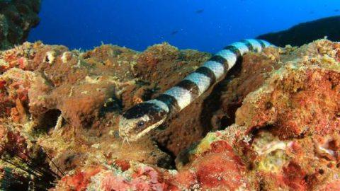 Γυναίκες στην Πάτρα ισχυρίζονται ότι τις δάγκωσε φίδι στη θάλασσα!