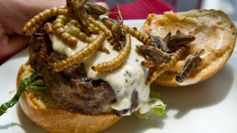 Έρχονται τρόφιμα από… έντομα! Στα σουπερμάρκετ της Ελβετίας από την επόμενη εβδομάδα