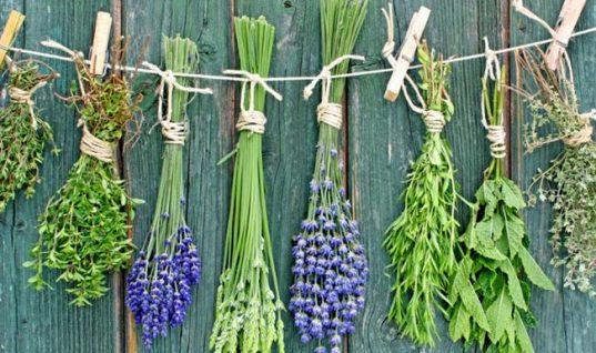 Τα 2 αρωματικά βότανα που σε βοηθούν να καταπολεμήσεις το άγχος!