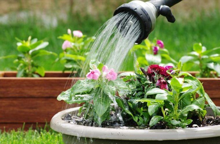 9 λάθη που κάνουμε κάθε φορά που ποτίζουμε τα φυτά μας