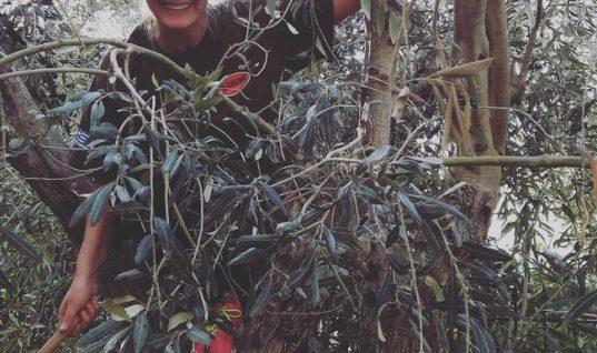 Από το πλατό στο χωράφι: Παρουσιάστρια ειδήσεων μαζεύει ελιές!