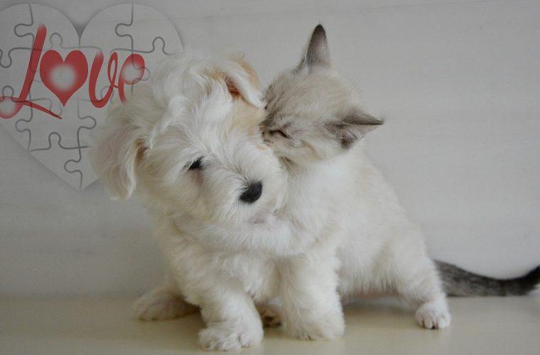 Σκύλος ή γάτα; Τι δείχνει η επιλογή κατοικίδιου για την προσωπικότητά του ιδιοκτήτη