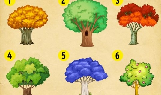 Τεστ: Διαλέξτε ένα δέντρο και ανακαλύψτε τι σας περιμένει το 2018!
