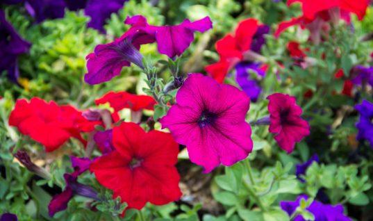 Τα 10 λουλούδια που αγαπούν την άνοιξη και γεμίζουν χρώμα το μπαλκόνι σου!