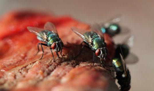 Τρία κόλπα για να κρατήσετε τις μύγες μακριά από το τραπέζι!