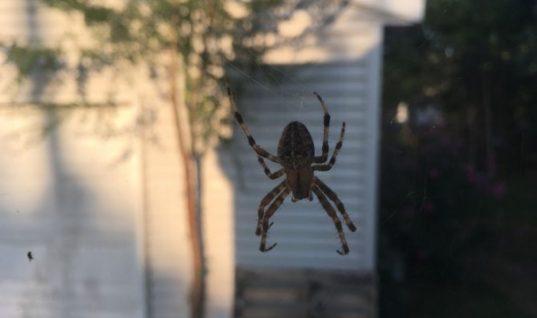 Δύο τρόποι για να μην πιάνει σύντομα το σπίτι σας αράχνες!