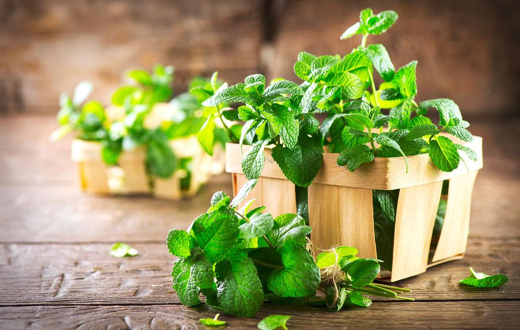 Ποια είναι τα 7 καλύτερα αντικουνουπικά φυτά (εικόνες)