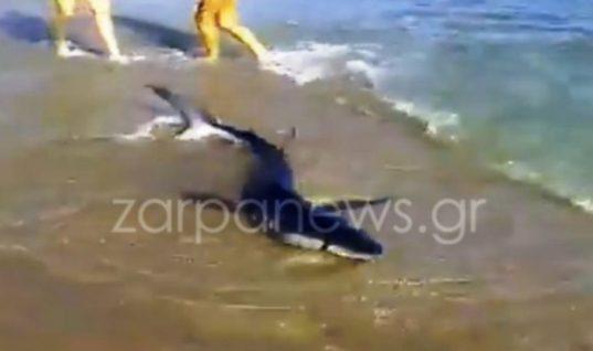 Πάγωσαν οι λουόμενοι σε παραλία της Κρήτης: Καρχαρίας βγήκε στην ακτή