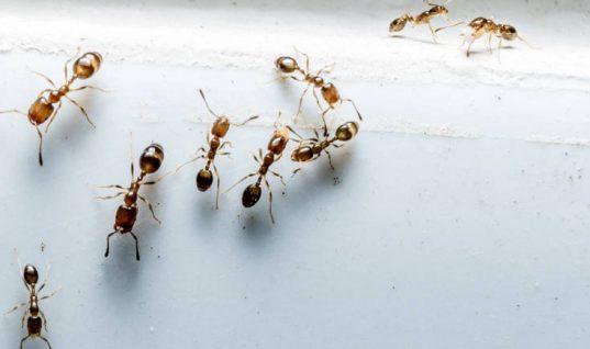 Viral:΄Το απίστευτο κόλπο μιας γυναίκας για να διώχνει μακριά τα μυρμήγκια!