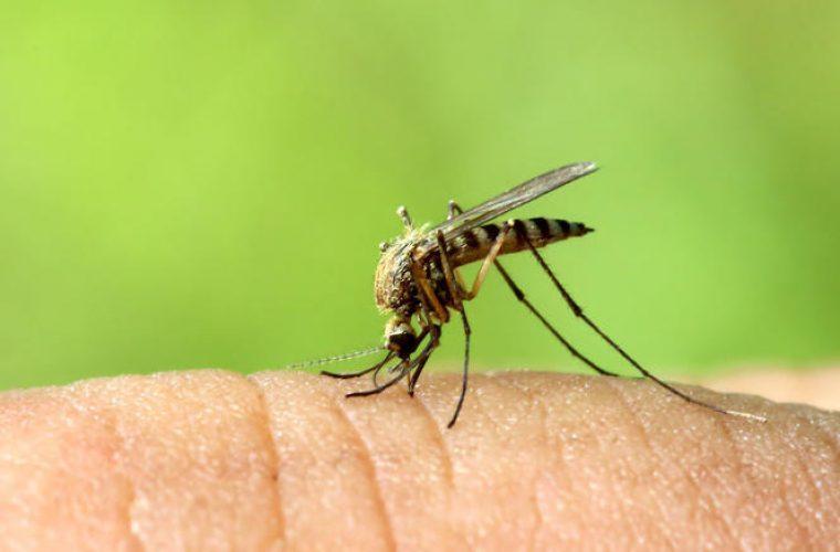 Συναγερμός σε 25 δήμους – Μολυσμένα κουνούπια μεταδίδουν τον ιό του Δυτικού Νείλου – 3 νεκροί