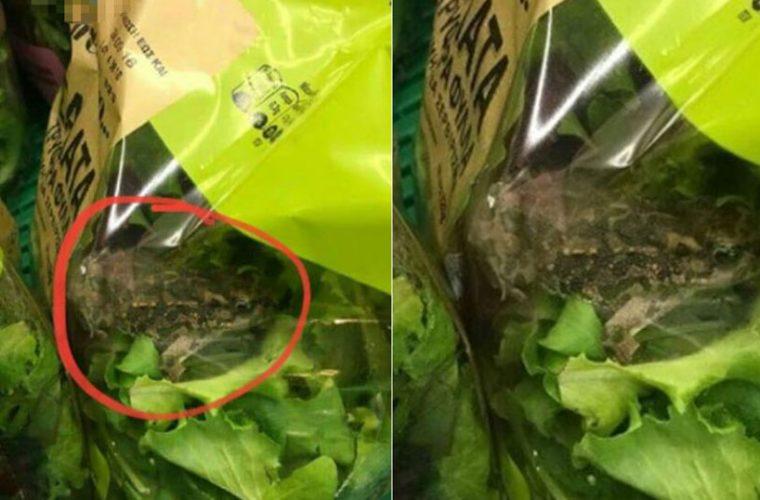 Σάλος με τον βάτραχο που βρέθηκε μέσα σε σαλάτα γνωστής αλυσίδας σούπερ μάρκετ (εικόνα)
