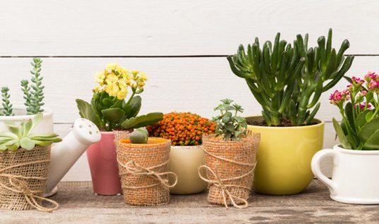 Τρία φυτά εσωτερικού χώρου που βοηθούν στην καταπολέμηση του άγχους!