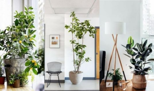 Πρωτότυποι τρόποι για να βάλετε φυτά στο σπίτι σας