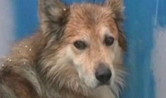 Εγκλημα στην Κέρκυρα: Ο σκύλος της 29χρονης την περιμένει στην πόρτα, μέσα στο κρύο, κάτω από βροχή (video)