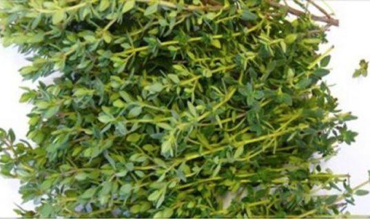 Το καλύτερο βότανο για κοιλιακούς πόνους, αρθρίτιδα, διάρροια, πονόλαιμο & γρίπη