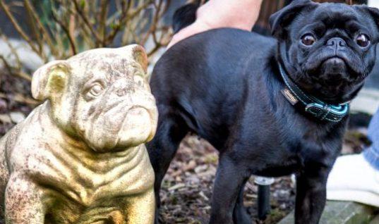 Εισπρακτική εταιρεία κατάσχεσε… σκύλο και τον πούλησε στο eBay έναντι 750 ευρώ!