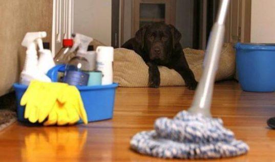 Δείτε πού βρίσκονται τα περισσότερα μικρόβια στο σπίτι σας