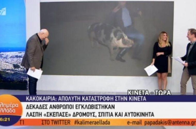Γουρούνι δάγκωσε ρεπόρτερ του Παπαδάκη on air – Ούρλιαζε ο δημοσιογράφος