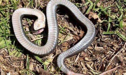 Απίστευτη τραγωδία στο Αγρίνιο: Σκότωσε φίδι στο σπίτι του και μετά πέθανε από ανακοπή