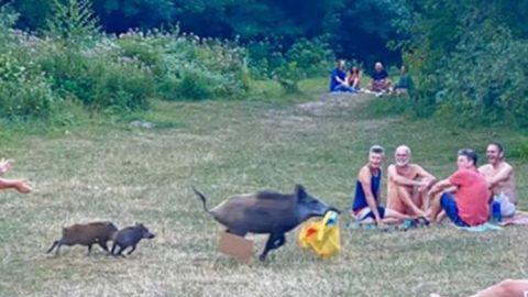 Μυθικές στιγμές: Κυνηγούσε ολόγυμνος ένα αγριογούρουνο που του έκλεψε το λάπτοπ! (εικόνες)