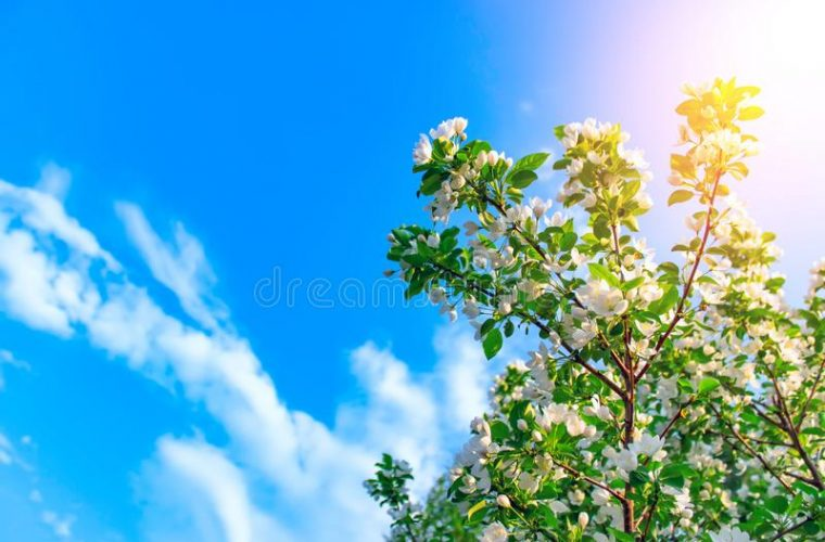 Καιρός: Έρχονται ηλιόλουστες μέρες με υψηλές θερμοκρασίες, σύμφωνα με τον Κλέαρχο Μαρουσάκη