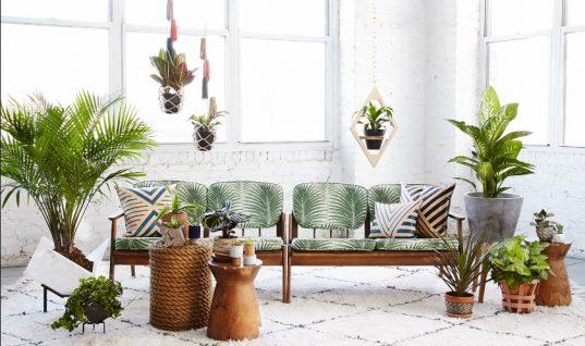 Φυτά εσωτερικού χώρου που δεν χρειάζονται πολύ φως και πότισμα! (εικόνες)